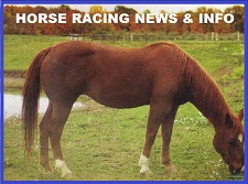 Horse Racing News ~ Info ~ Links